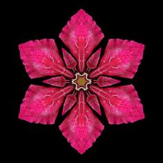 Flower Mandala: Red Clematis I Flower Mandala, Mandala Art, Yin Yang, Fractal Art, Fractals, Flowers Gif, Black Background Images, Tropical Colors, Patterns In Nature