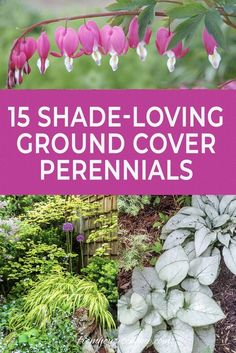 Plant these shade-loving ground cover plants under bushes and trees to help prevent weeds from growing and add some beautiful flowers to your garden. 15 Stunning Perennial Ground Cover Plants That Thrive in the Shade - Gardening @ From House To Home Partial Shade Perennials, Long Blooming Perennials, Hardy Perennials, Flowers Perennials, Planting Flowers, Shade Flowers Perennial, Annual Shade Flowers, Best Shade Flowers, Flowers To Plant