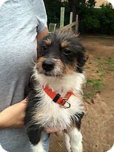 Verona, NJ Terrier (Unknown Type, Small) Mix. Meet Dingo
