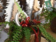 #Frauenhaarfarn #Adiantum #Dekoriert #Weihnachtlich #Erlebnisgärtnerei #Hödnerhof #Ebbs #Mils #Dez #Innsbruck #Eigenproduktion #Jungpflanzen #Weihnachten #Winter #DIY #Floristen #Kreativwerkstatt Amaryllis, Christmas Wreaths, Winter Diy, Blog, Innsbruck, Holiday Decor, Home Decor, Poinsettia, Plants