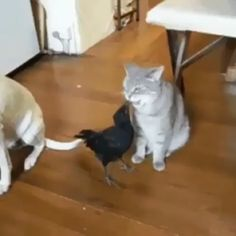 So amazing. This bird is feeding the cat and dog! - Unlikely Friendships - Chien Cute Animal Videos, Funny Animal Pictures, Cute Funny Animals, Cute Cats, Funny Dogs, Mundo Animal, My Animal, Animals And Pets, Baby Animals