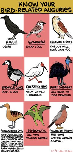 Know Your Bird-Related Auguries