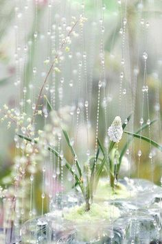 flowers, rain drops and white flowers