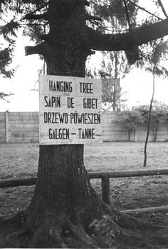 Dachau, Germany, A memorial sign on a tree that was used for hanging.
