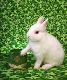 St. Patrick's Day & our anniversary.  Everything is better with a bunny!