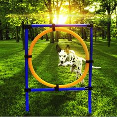 Dog Training Jump Hoop Pet Cat Outdoor Games Exercise Equipment Training Agility Obedience Equipment #DogObedienceTipsandAdvice