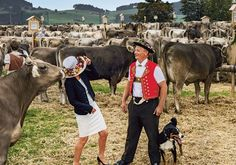 Activities, events, restaurants and accommodations - discover the beautiful region of Appenzellerland. Switzerland Tourism, Switzerland Hotels, Hiking, Horses, Activities, Holidays, Animals, Walks, Holidays Events