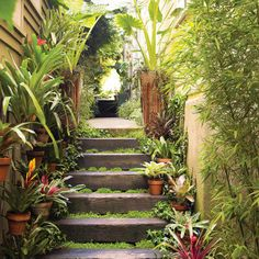 Tropical paradise perfect for the Australian climate Turn the side yard into an exotic outdoor destination A jungly planting theme gives a tantalizing glimpse of the oasi. Seiten Yards, Hillside Garden, Small Outdoor Spaces, My Secret Garden, Tropical Paradise, Backyard Landscaping, Landscaping Ideas, Garden Inspiration, Outdoor Gardens