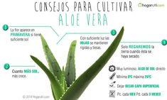 Consejos para cultivar el Aloe Vera #garden #jardin #plantas #aloevera