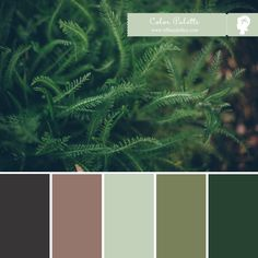 Tiffany-Kelley-Design-Color-Palette - Fern Tones -18