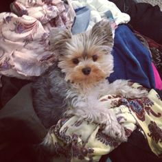 The aftermath of trying to decide what to wear. #pebblesproblems #pebblestheceo