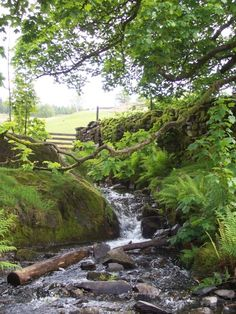 a quiet brook...