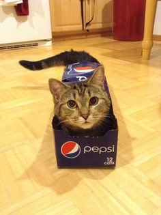 Kitty Cat Loves Pepsi!