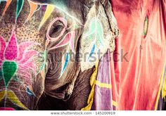 Colorful Elephant Poster India Jaipur state of Rajasthan Poster Poster. Jaipur, Rajasthan India, Elephant India, Elephant Love, 8k Ultra Hd, Elephant Facts, Elephants Photos, India Images, Win A Trip