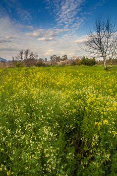 winter flowers in Argos Rainy Weather, Winter Flowers, Summer Winter, Argos, Sunny Days, Vineyard, Greece, Mountains, Nature