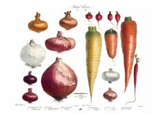 Album Vilmorin. The Vegetable Garden. TASCHEN Books