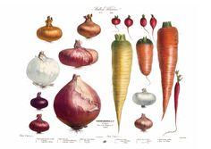 Album Vilmorin. The Vegetable Garden. Libros TASCHEN