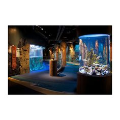 Aquarium of the Pacific | Exhibits | BP Sea Otter Habitat | BP Sea... ❤ liked on Polyvore featuring house, home, rooms, pictures and dream house