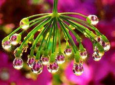 Gorgeous droplets on a stem.  http://www.trish120.wordpress.com