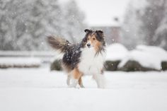 Chico's not sure if he can enjoy the snow when he... - of Carnivora.