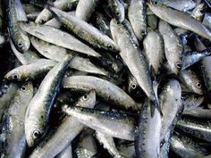 Sardines fish of the month in #Lisbon June is party time in the city! #Portugal Dads FAVORITE.....Whoo Whoooo