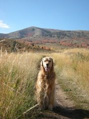 A perfect dog day afternoon on Gibson Jack Loop in Idaho: https://dogtripper.wordpress.com/2011/10/17/a-perfect-dog-day-afternoon/