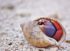23 Cool Hermit Crab Pictures (A Little Shy by Cassidy Edwards)