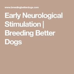 4ac45ff6e Early Neurological Stimulation   Breeding Better Dogs. Pam Russell · Puppy  info