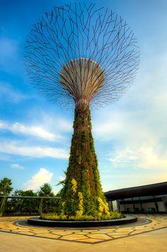 Tree: Gardens by the Bay, Singapore Singapore Tourist Spots, Singapore Vacation, Singapore Attractions, Singapore Travel Tips, Stay In Singapore, Holiday In Singapore, Sands Singapore, Singapore Garden, Singapore Tour Guide
