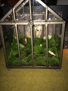 Mini drivhus med mos.
