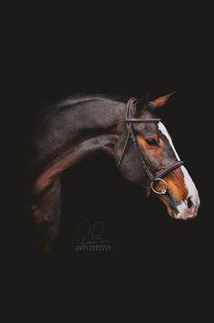 gianaterranovaphotography: Koraal// DO NOT REPOST WITHOUT CREDIT // horse portrait