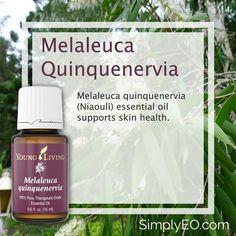 Melaleuca quinquenervia essential oil supports skin health.