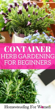 Cool Container herb gardening for beginners | 10 day herb gardening for beginners e-course FREE.