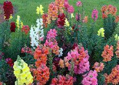 As melhores flores para um jardim de Inverno e como as cultivar | O Meu Jardim