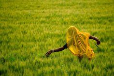Eric Meola / India / Woman Harvesting, Gujarat