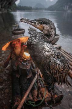 Fisherman & the Cormorant, China