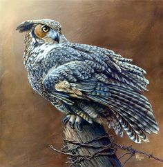 GREAT HORNED OWL WESTERN WILDLIFE ART PRINT CANVAS