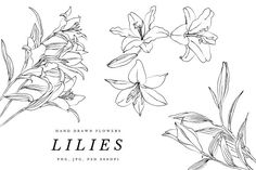 Lilies and Lotus Florals by VictoriaKStudio on @creativemarket
