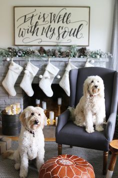 Jack and Lily Goldendoodle and Labradoodle - The Inspired Room House Tour