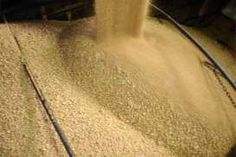 Soy meal that is produced in the US seems to be the favoured form of feed of Japanese poultry for the last 50 years. Demand has now shifted and soy meal imports there are expected to skyrocket, according to the USDA. It may come as good news for US soybean farmers, since US Census figures show Japan is the second largest buyer of US soy meal, in Asia.
