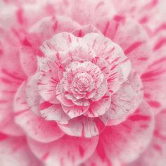 Animated gif uploaded by ❤brianna❤. Find images and videos about pink, gif and aesthetic on We Heart It - the app to get lost in what you love. Magic Eye Pictures, Gif Pictures, Flowers Gif, Flowers Nature, Loop Gif, Trippy Gif, Transparent Flowers, Animated Gifs, Pink Rose Flower