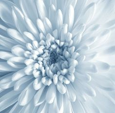 Flower Garden Design Plans Best Of Eden Brook Funeral Home Cemetery In Calgary Alberta Baby Blue Aesthetic, Light Blue Aesthetic, Aesthetic Colors, Flower Aesthetic, Dahlia, Love Blue, Blue And White, Bleu Pastel, Everything Is Blue