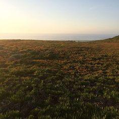 Caliparks : Fort Ord Dunes State Park