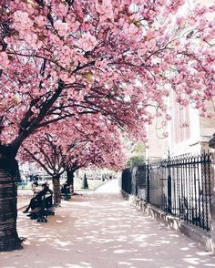 Ideas for beautiful tree photography wedding photos Spring Aesthetic, Flower Aesthetic, Spring Pictures, Pretty Pictures, Green Pictures, Spring Photography, Nature Photography, Aerial Photography, Night Photography