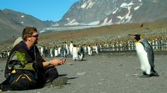 The world's 10 best places to see penguins