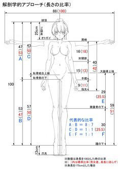 """""""Tips.0 解剖学的な話 図中で赤文字で書かれた比率は、<全身長対応、男女共用>の「成人」の体の各パーツの長さの身長に対する「比率」です。非常に汎用性が高いので、覚えておくとプロポーションで悩むことは少なくなるかも知れません。"""""""