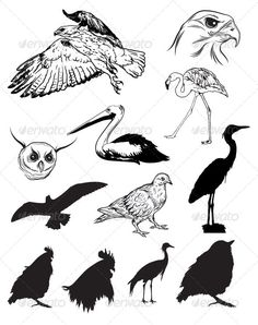 Realistic Graphic DOWNLOAD (.ai, .psd) :: http://jquery-css.de/pinterest-itmid-1006976685i.html ... Vector Birds ...  animal, birds, eagle, eps, fly, jungle, owl, sky, vector, wing  ... Realistic Photo Graphic Print Obejct Business Web Elements Illustration Design Templates ... DOWNLOAD :: http://jquery-css.de/pinterest-itmid-1006976685i.html