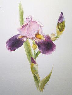 Iris watercolor vignette by Delilah Fiechter