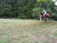 Galloping out of the woods at blenheim
