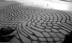 """""""Sand man: The artist's designs cover great swathes of beach near San Francisco, to be glimpsed by passersby for just a few hours before they disappear again"""" Andres Amador"""